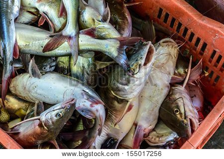 Fish filled crate in Caribbean town of Livingston, Guatemala, Central America