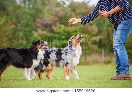Woman Trains With Two Dogs