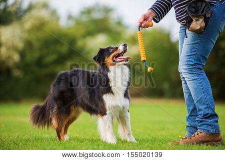 Woman Trains With An Australian Shepherd