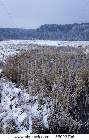 Frozen river at winter  in cloudy day