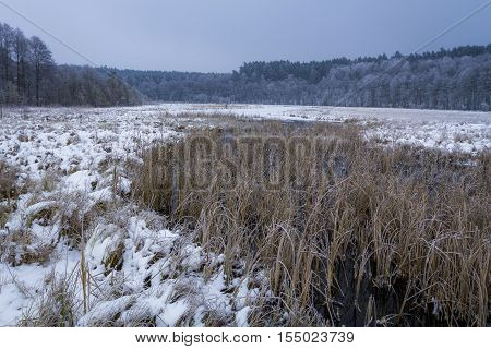 Frozen Swamp Covered With Snow In The Winter
