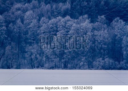Frozen Lake At The Forest In Winter