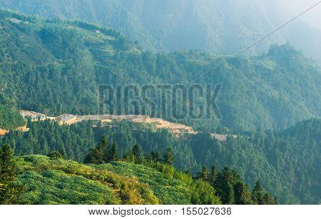 Mountain forest, green plants, faint, zhejiang China