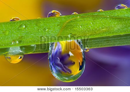 Water droplets, wildflowers and a blade of grass
