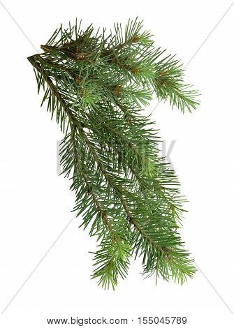 The branch of a Christmas tree isolated on white background without shadows. Nature in detail. Christmas. New Year. Symbol The holiday.