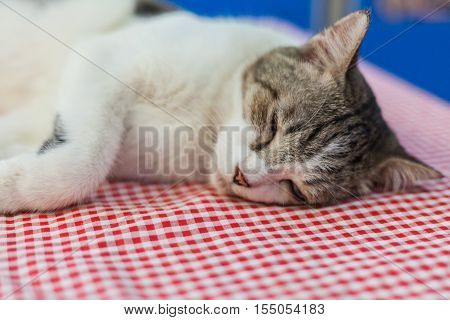 beauty cat sleeping on the table in room