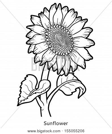 Coloring book for children, colorless flower Sunflower