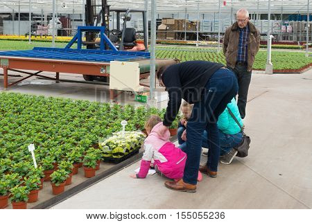 NAALDWIJK NETHERLANDS - APRIL 2 2016: Unknown family with kids visiting a commercial greenhouse during the annual