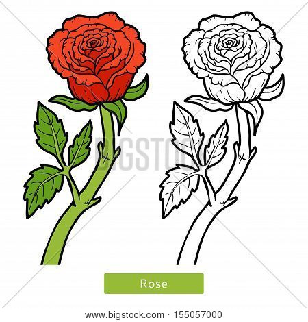 Coloring book for children, flower red Rose