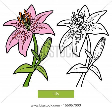 Coloring book for children, coloring page, flower Lily