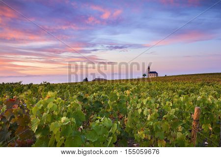 Vineyards And Church Of Saint Laurent D'oingt At Sunrise, Beaujolais Land, France