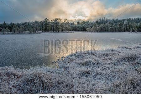 Bog landscape in December with frozen lake.