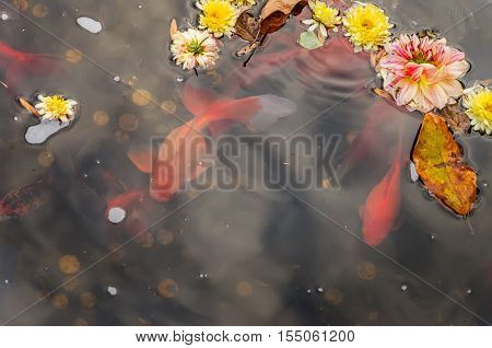 Pond with flowers and goldfish in a botanical garden