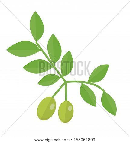 Olive branch icon. Green olives on the branch flat style olives isolated on a white background. Olive logo. Vector illustration