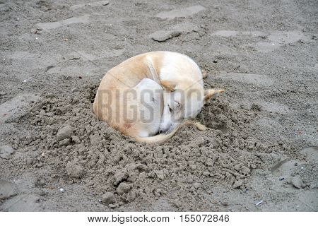 Dog sleeping on sand beach - Stock Photo