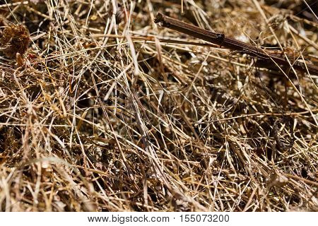 view of a hay bundle, clouse up, Hay background,
