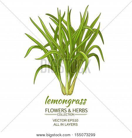 lemongrass plant vector illustration on white background