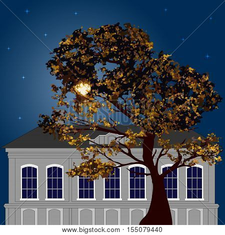 Night in the city. Autumn tree on the background of moonlit old building and the starry sky. Vector illustration. Square location.