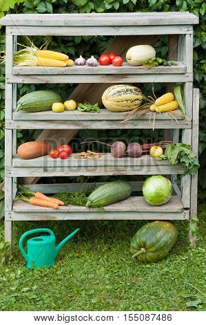 Fresh Organic Vegetables On Old Wooden Construction Ladder With Watering Can. Fresh Young Vegetables. Composition Of Vegetables On Wooden Ladder.