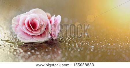 Website banner of a soft pink flower with water drops