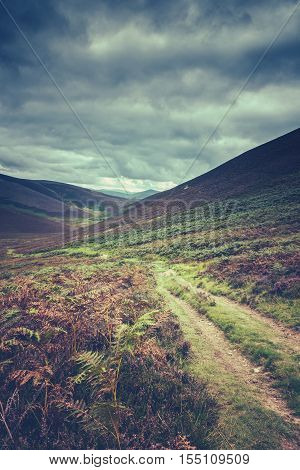 An Empty and Remote Hillside Trail Or Track In The Scottish Purple Heather