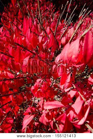 In The Middle Of Burning Bush