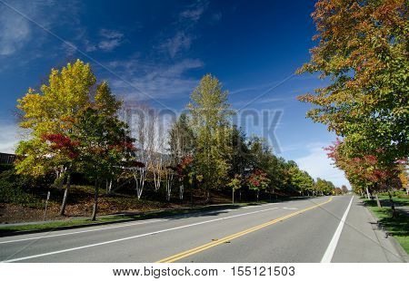 Residential Street In Seattle Suburbs During Early Fall Season