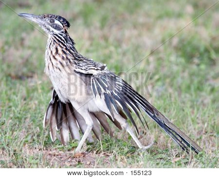 Roadrunner Stretch