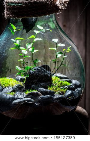 Wonderful Rain Forest In A Jar, Save The Earth Concept