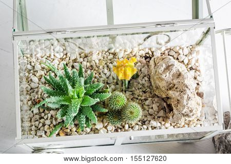 Wonderful Live Cactus In A Glass Terrarium With Self Ecosystem