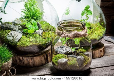 Stunning Rain Forest In A Jar, Save The Earth Idea
