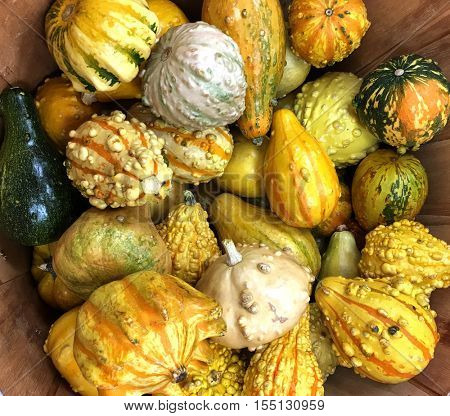 Very Nice colorful Basket of Summer Squash