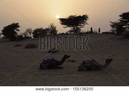 JAISALMER, RAJASTHAN, INDIA - FEBRUARY 12, 2016 - Sunset with camels in Thar desert