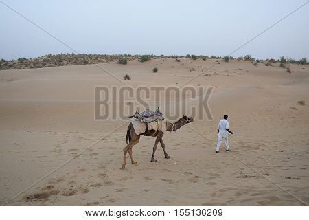 JAISALMER, RAJASTHAN, INDIA - FEBRUARY 12, 2016 - Unidentified indian guy with his camel walking on the dunes in Thar desert