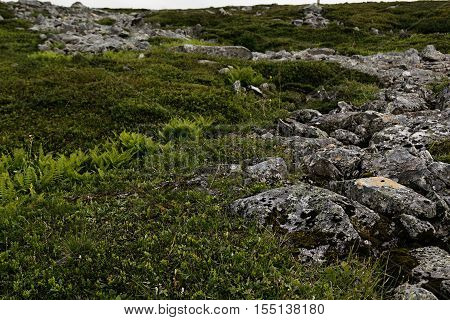 Green alpine meadow and stones in the Highlands Scotland. Arctic summer the tundra Norway.