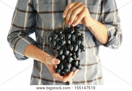 Farmers hands with bunch of grapes, indoor
