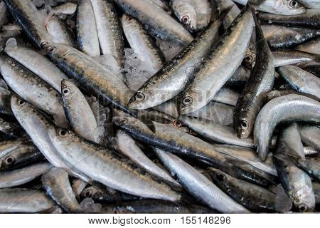 Freshly caught Europian pilchard fishes or Sardina pilchardus and ice in the box on the counter at the fish shop. Europian pilchard fishes. Horizontal. Top view. Close.