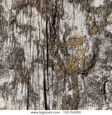 Ageg wood texture background. Rectangular with moss and aged cracks.