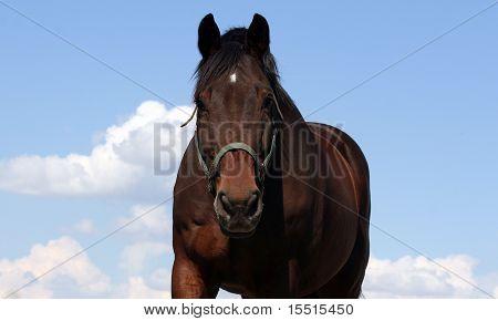 Dark Bay Horse and Sky
