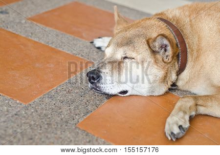 Dog Sleep