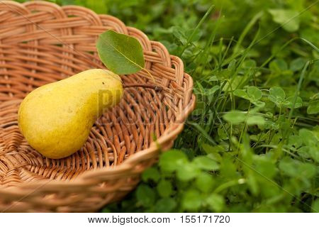 One Fresh Ripe Yellow Pear With Leaf In Wicker Basket On Green Grass Outdoor Close-up. Background Of Wicker Basket With Fresh Ripe Pear. Fresh Ripe Yellow Pear. Selective Focus.