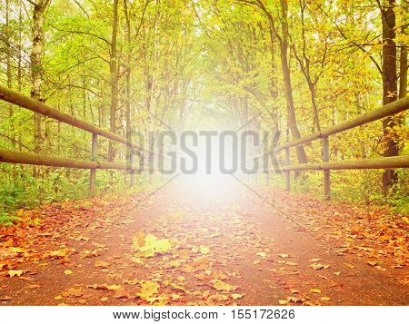 Asphalt Way With Wooden Handrais In  The Colorful Autumn Forrest