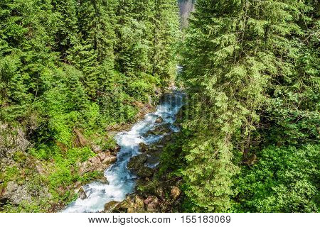 Mountain Stream Flowing Through The Trees In The Mountains