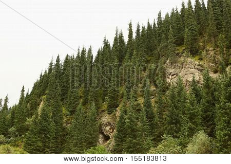 Nature, landscape, mountain landscape, pasur, rocks, summer, stones, mountain, rock, scree, Kyrgyzstan, ridges, plants, trees, flora