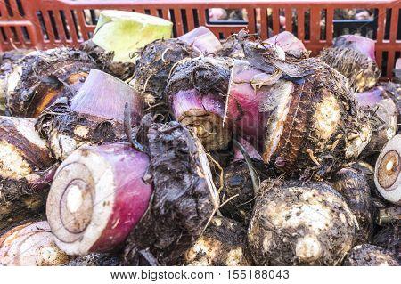 A heap of taro root.. Fresh Produce of Local Farmer Market