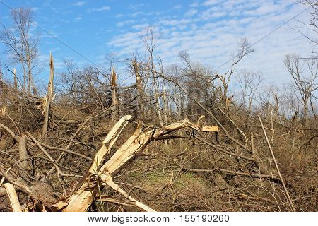 A wooded area in northern Illinois decimated by a tornado.