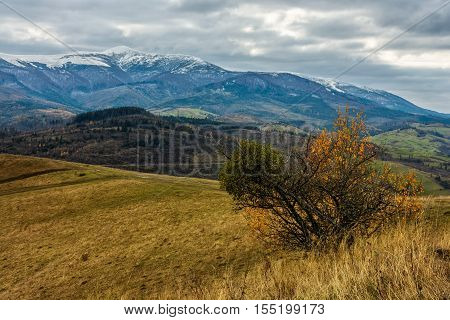 Snowy Peaks Over The Meadow