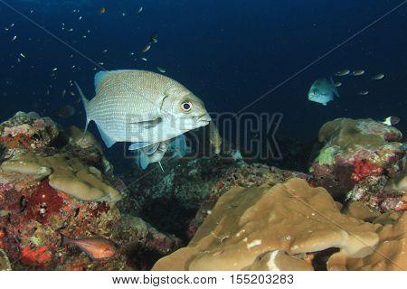 Fish on coral reef in ocean