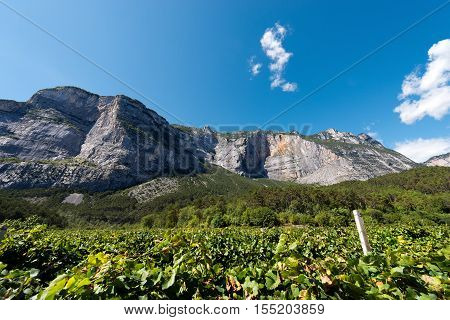 Rock faces and vineyards in the mountains of the Sarca Valley (Valle del Sarca) in Trentino Alto Adige Italy Europe