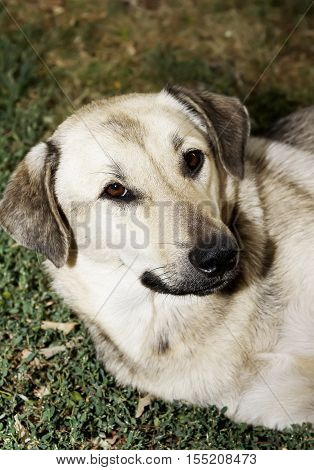 Stray dog dog lying around on a concrete slab with a  wall in the background